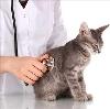 Ветеринарные клиники в Зеленоборском